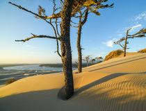 Die Oregon Dunes zeigen sich am Abend im besten Licht.  © Christian Heeb